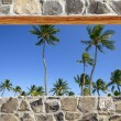 Stone masonry wall window tropical palm trees view — Stock Photo