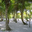 Caribbean beach with trees trunk painted white — Foto de Stock