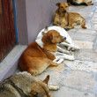 Mexican street dogs lazy having a rest - Stok fotoraf