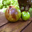 Passiflora edilus passion fruit green rotten - Foto de Stock