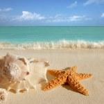 海シェル ヒトデ熱帯砂のターコイズ ブルーのカリブ海 — ストック写真