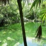 Cenote Riviera Maya jungle mayan Quintana Roo — Stock Photo #5507352