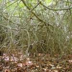 Постер, плакат: Mangroove jungle in central america wilderness