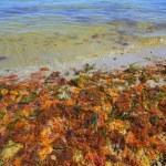 Colorful yellow red seaweed sea algae — Stock Photo