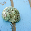 Blue wooden beach floor green sea shell - Stock Photo