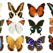 Butterflies collection colorful isolated on white - Foto Stock