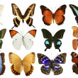 Butterflies collection colorful isolated on white — Stock Photo