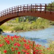 Red poppies flowers meadow river wooden bridge — Stock Photo