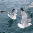 Active sea gulls seagulls over blue sea ocean — Stock Photo