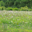 Flowers meadow field outdoor spring nature - Stock Photo