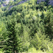 Pyrenees trees forest mountain summer scenics - Stock Photo