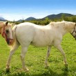 white horses meadow prairie grassland pyrenees — Stock Photo #5507660