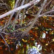 Mangrove swamp tropical water detail — Stock Photo