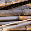 Royalty-Free Stock Photo: Cane background texture dried river canes