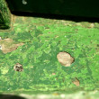 Green paint in wooden boat hull grunge aged — Stock fotografie