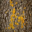 Brown tree trunk texture background — Stock Photo