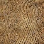 ������, ������: Aged old vintage rolling stones floor