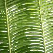 Green palm tree leaves background texture - Stok fotoğraf