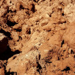Agriculture field red clay soil texture — Stock Photo