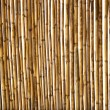 Dry cane texture background — Stock Photo