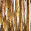 Stock Photo: Dry cane texture background