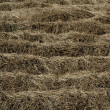 Dried brown plants in a fallow time — Stock Photo