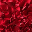 Red rose petals texture background — Foto de stock #5508173