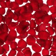 Red rose petals texture background — Stock Photo #5508186