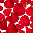 Red rose petals texture background — Stock Photo