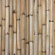 Dried cane texture, typical Mediterranean — Stock Photo