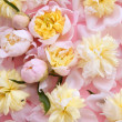 Colorful pink and yellow flowers background — Stock Photo #5508329