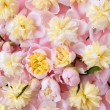 Colorful pink and yellow flowers background — Stock Photo #5508330