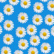 Colorful pattern with daisy flowers — Stock Photo