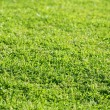 Green grass texture macro selective focus — Stock Photo