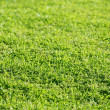 Green grass texture macro selective focus - Stock Photo
