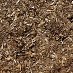 Posidonia algae seaweed dried texture mediterranean — Stock Photo