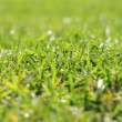 Garden green grass lawn macro perspective — Stock Photo #5508563