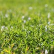 Garden green grass lawn macro perspective - Stock Photo