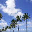 Fort Lauderdale tropical beach palm trees — ストック写真