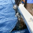 African man holding sailfish on sport fishing boat - Stock Photo