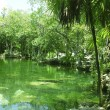 Cenote Riviera Maya jungle mayan Quintana Roo — Stock Photo #5509908