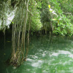 Cenote Riviera Maya jungle mayan Quintana Roo — Stock Photo #5509910