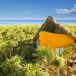 Stock Photo: Yellow house in Mexico tropical caribbejungle
