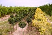 Ornamental plants colorful field — Stock Photo