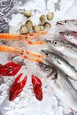 Seafood in market over ice — Stock Photo