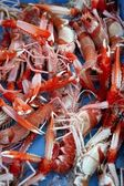 Mediterranean crustacean, Nephrops Norvegicus — Stock Photo
