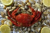 Lio carcinus puber crab over shell clams — Stock Photo