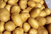 Poratoes many in market stand yellow brown — Stock Photo