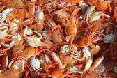 Mediterranean red crab pattern seafood texture — Stock Photo