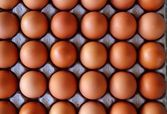 Eggs rows pattern box food background — Stock Photo